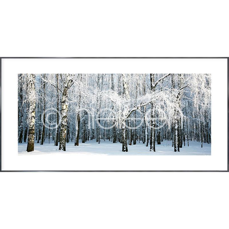 """Obramowany obraz """"Birch Forest Snow"""" z ramą aluminiową Alpha"""