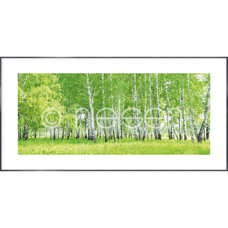 """Obramowany obraz """"Birch Forest"""" z ramą aluminiową Alpha"""