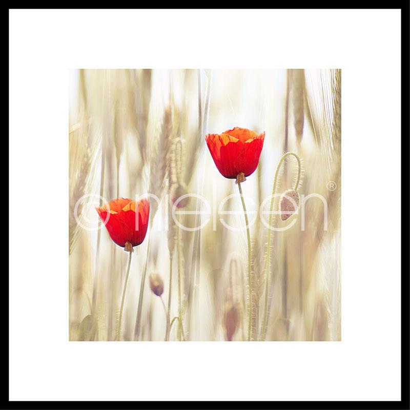 """Obramowany obraz """"Flower Cornfield"""" z ramą aluminiową C2"""
