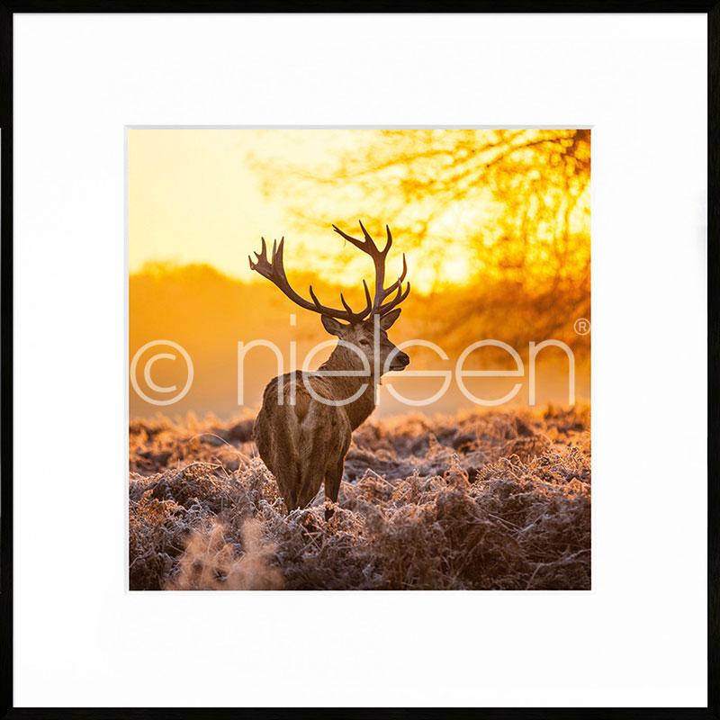 """Obramowany obraz """"Cervine Sunset"""" z ramą aluminiową C2"""