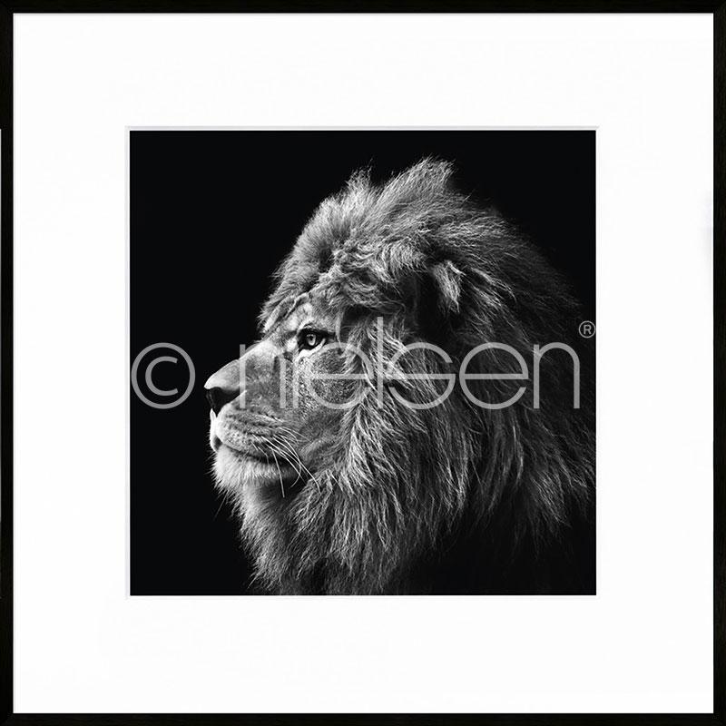 """Obramowany obraz """"Lion black and white"""" z ramą aluminiową C2"""