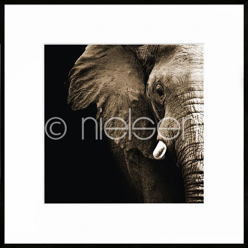 """Obramowany obraz """"Elephant"""" z ramą aluminiową C2"""