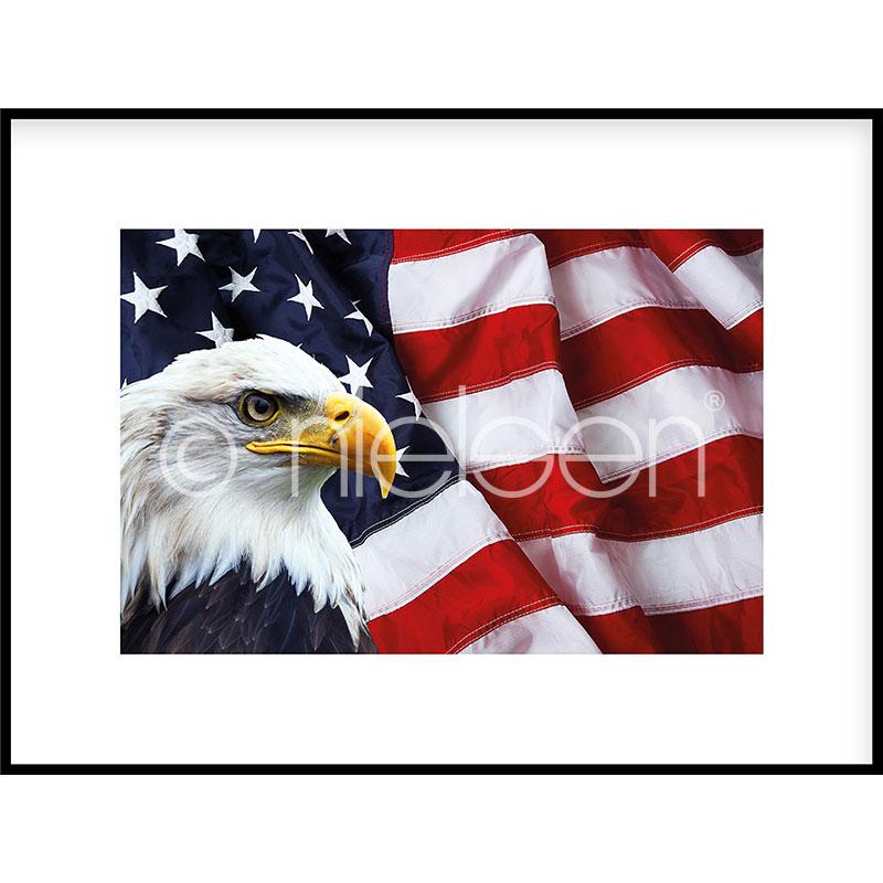 """Obramowany obraz """"Eagle USA"""" z ramą aluminiową C2"""
