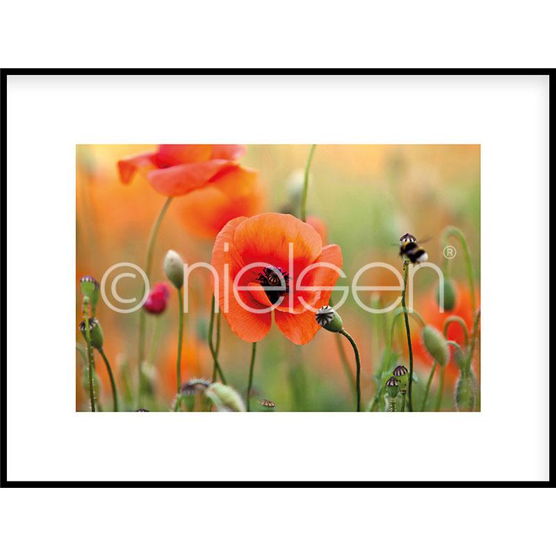 """Obramowany obraz """"Poppy Flower"""" z ramą aluminiową C2"""