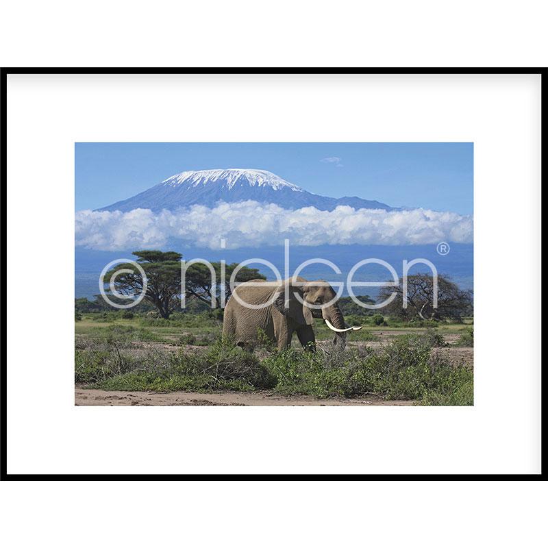 """Obramowany obraz """"Elephant Prairie"""" z ramą aluminiową C2"""