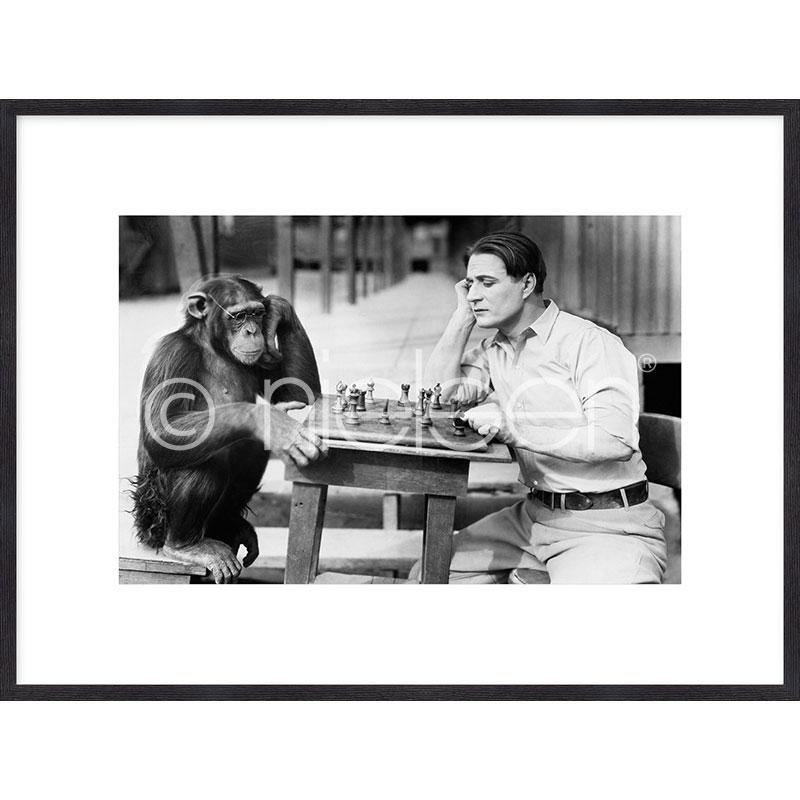 """Obramowany obraz """"Monkey chess"""" z ramą drewnianą Quadrum"""