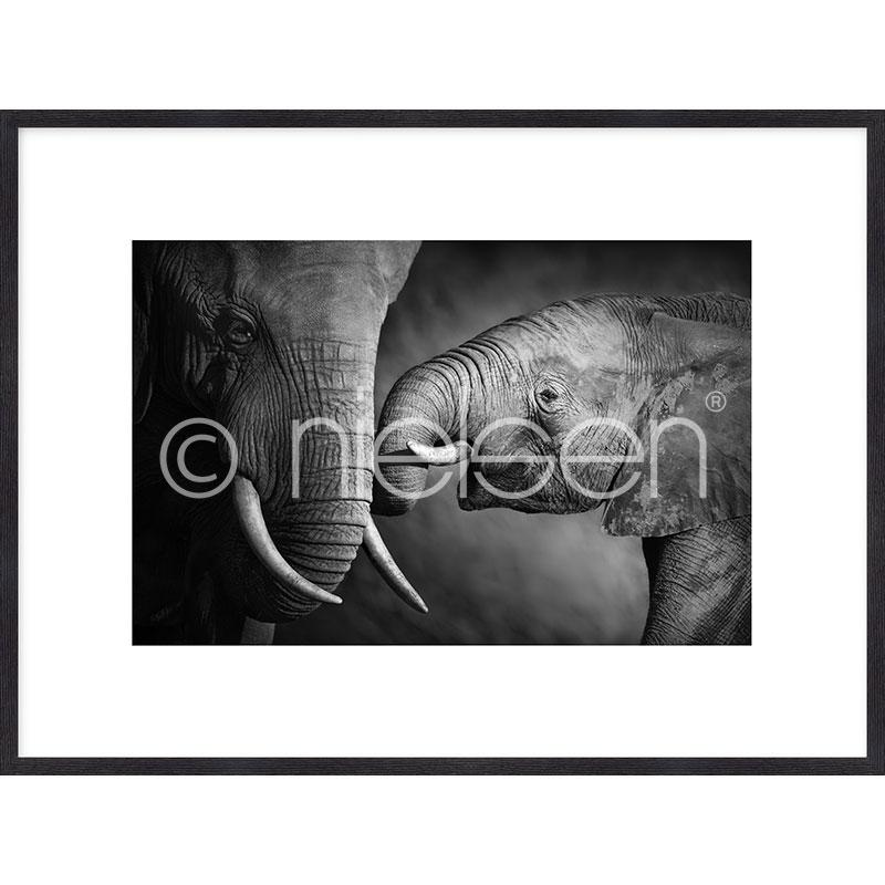 """Obramowany obraz """"Elephant Baby"""" z ramą drewnianą Quadrum"""