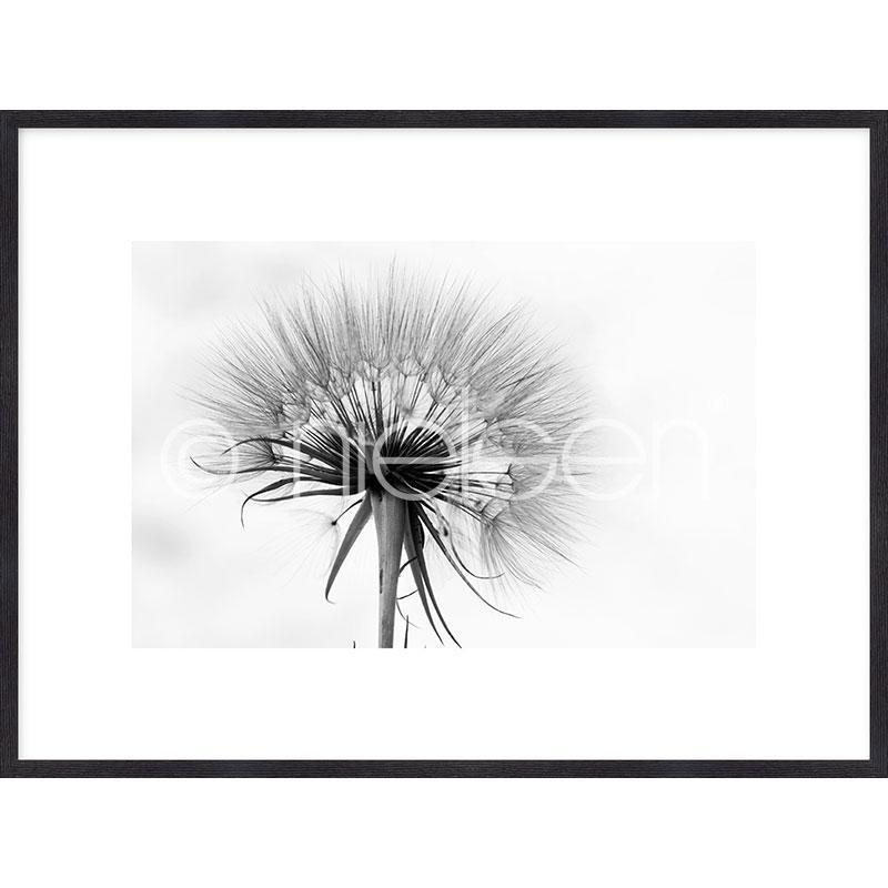 """Obramowany obraz """"Dandelion abstract"""" z ramą drewnianą Quadrum"""