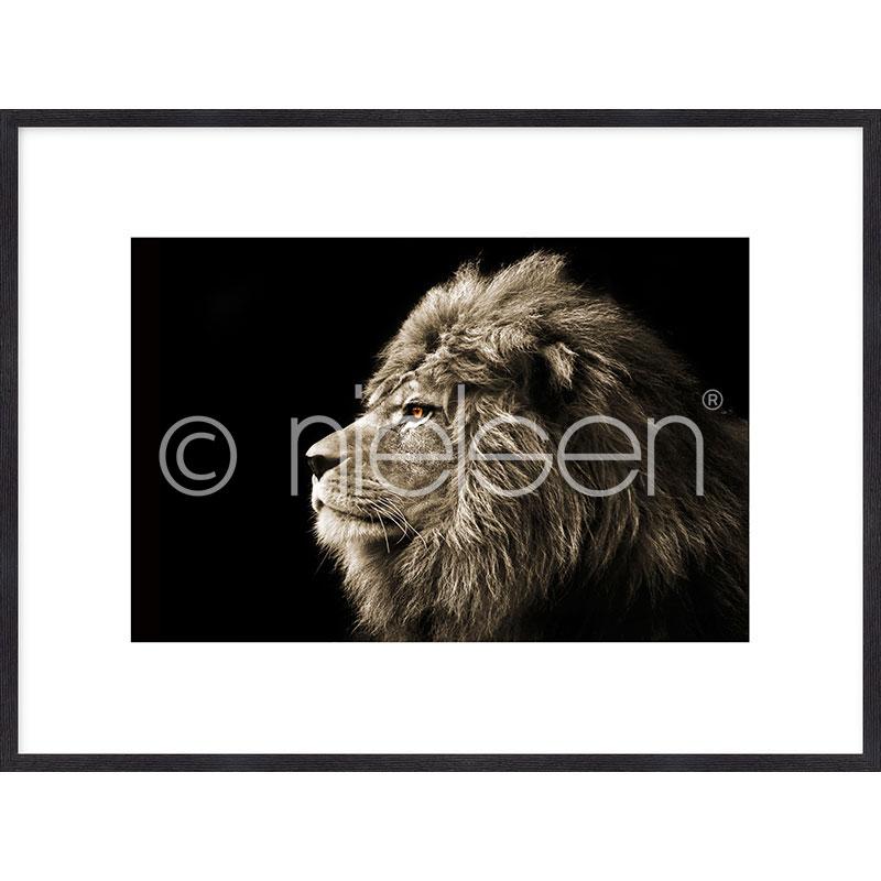 """Obramowany obraz """"Lion black and white"""" z ramą drewnianą Quadrum"""