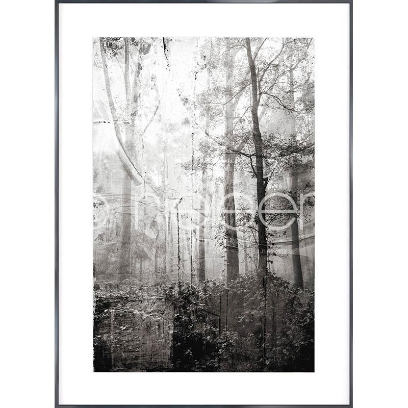 """Obramowany obraz """"Forest Black and White"""" z ramą aluminiową Alpha"""