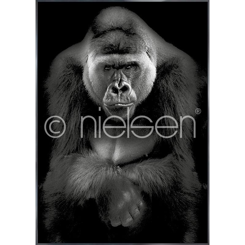 """Obramowany obraz """"Gorilla"""" z ramą aluminiową Alpha"""