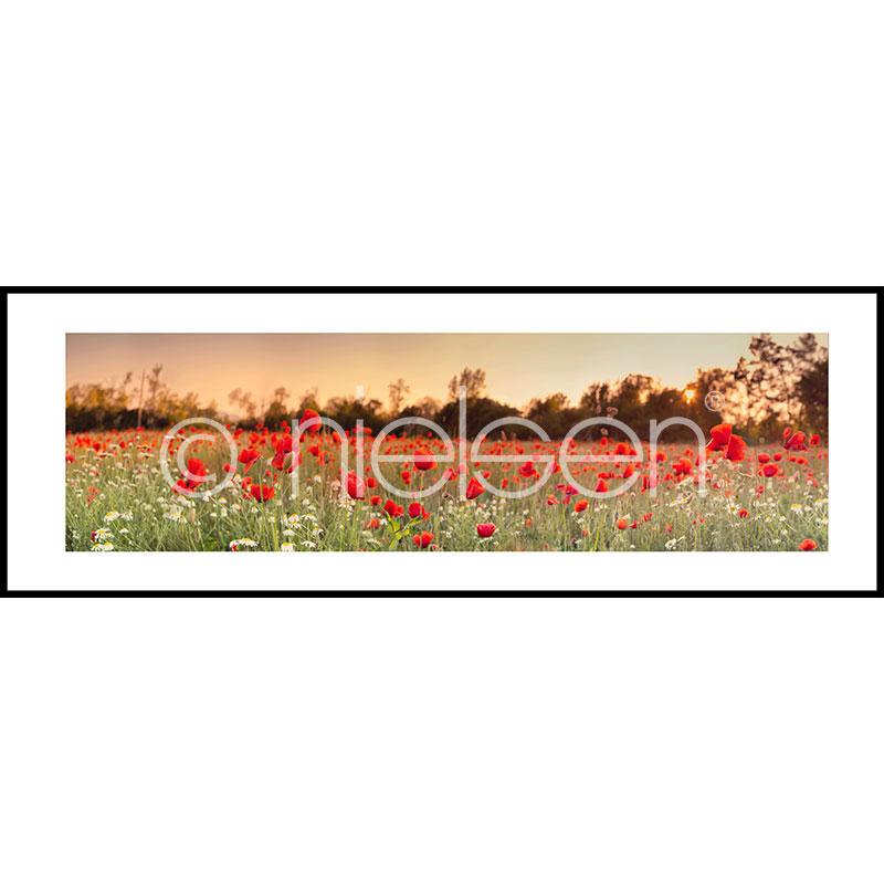 """Obramowany obraz """"Poppy Flower Field"""" z ramą aluminiową C2"""