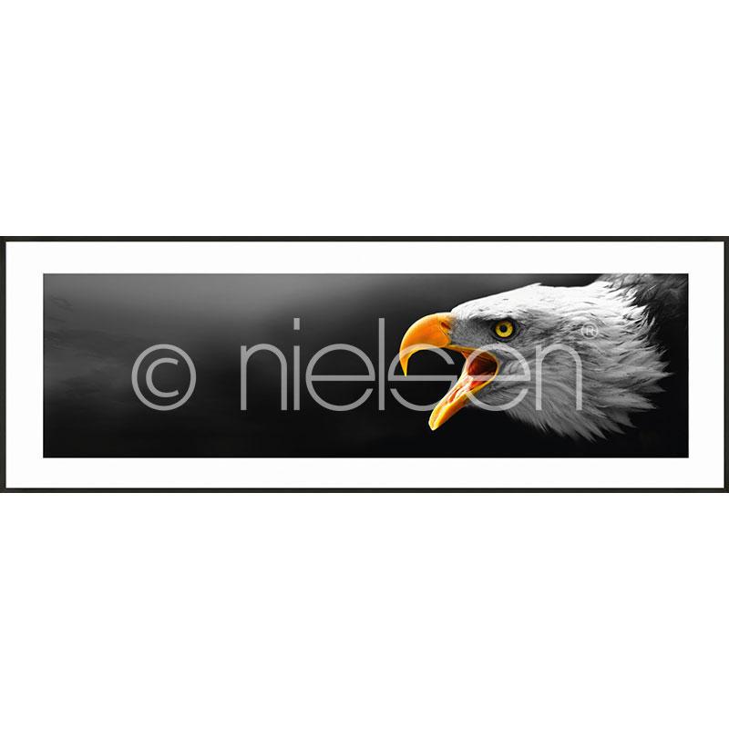 """Obramowany obraz """"Eagle"""" z ramą aluminiową C2"""
